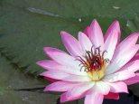 web lodhi pk flowers (9)
