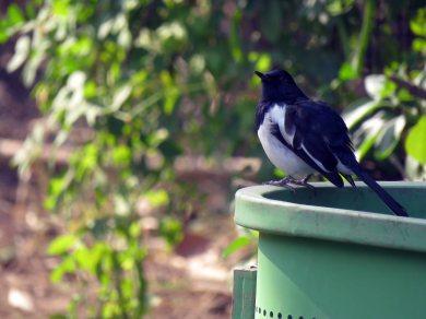 birds etc Delhi (1)