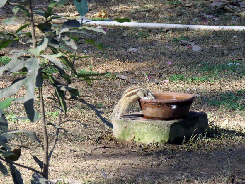 birds etc Delhi (11)