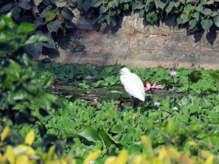 birds etc Delhi (2)