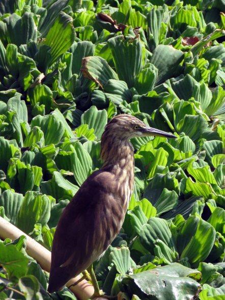birds etc Delhi (3)