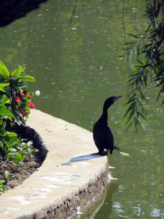 birds etc Delhi (4)