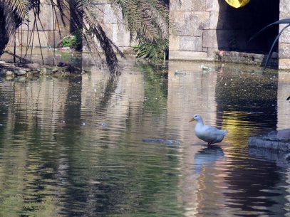 birds etc Delhi (5)