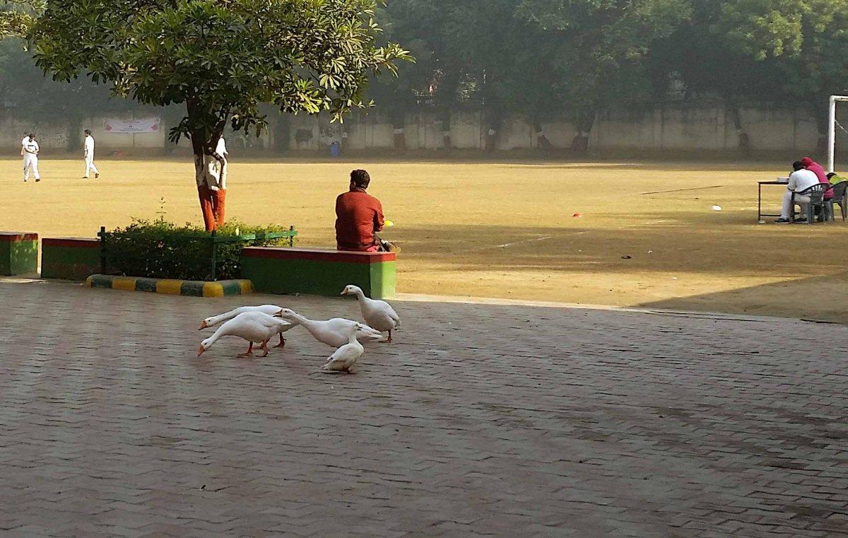 Birds, squirrels, and a monkey in New Delhi