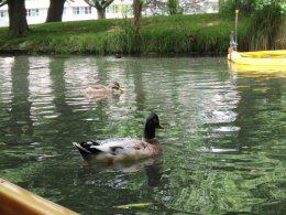 Wildlife on the Avon