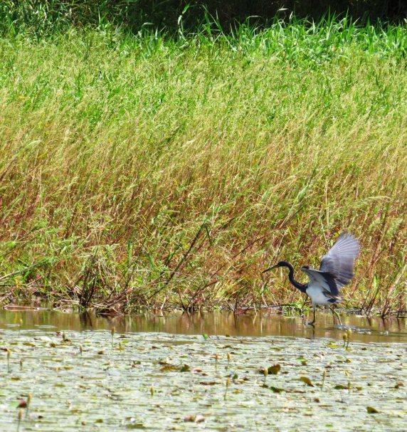 Chasing her prey Florida
