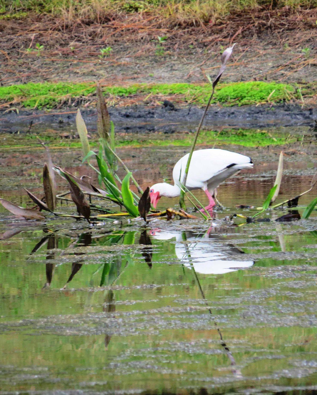 Water around the world – and waka, birds andmermaids