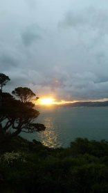 Wellington from Matui Somes island