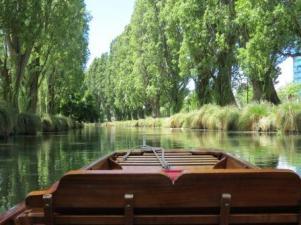 Poplar trees along the Avon River