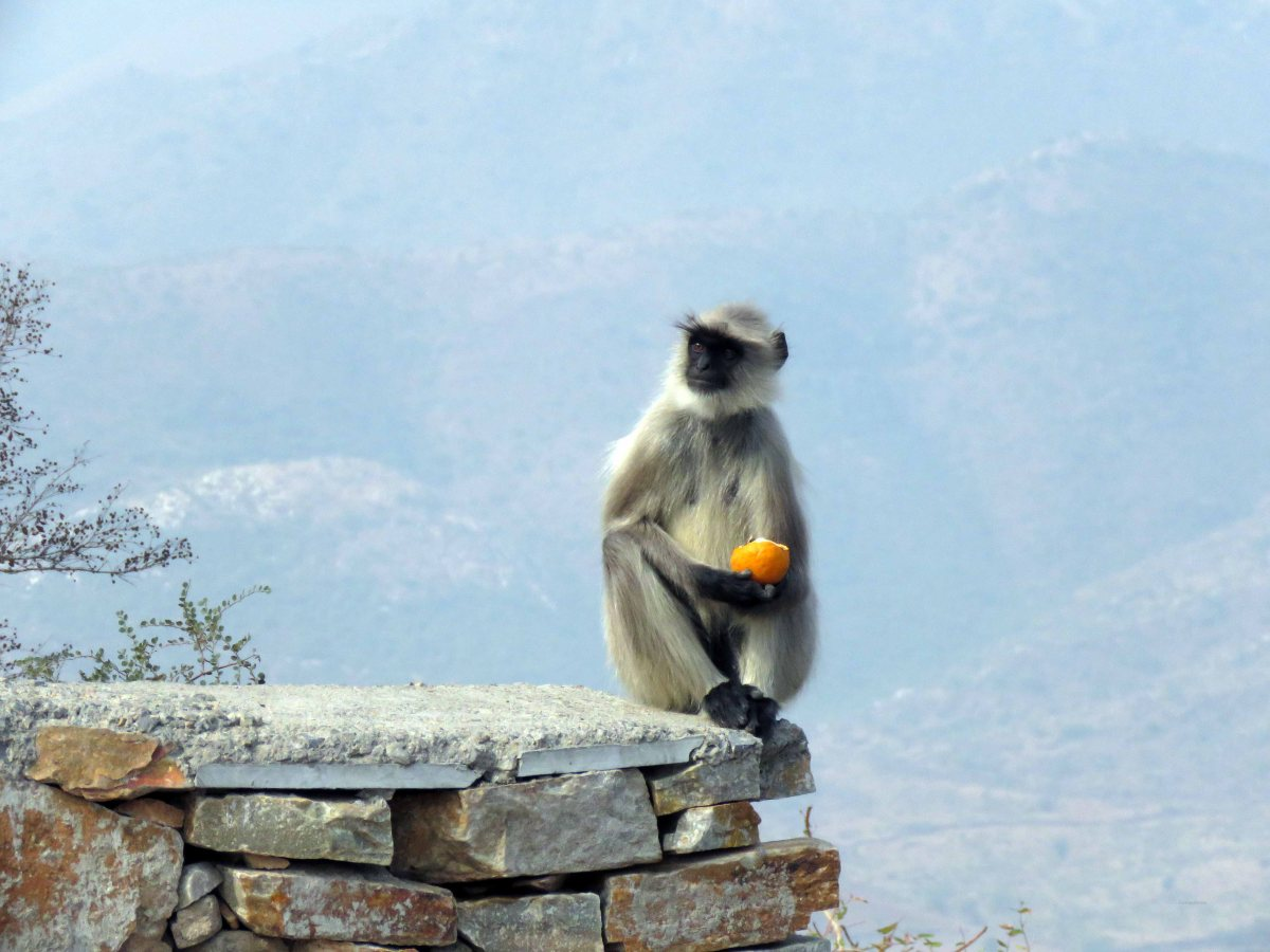 Encounters with creatures in Udaipur, India