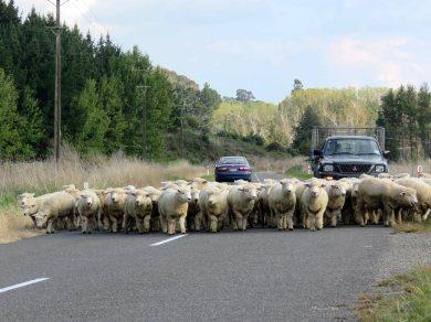 NZ traffic jam